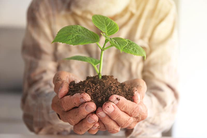 gardening for seniors and all its wonderful effects