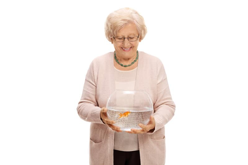 pets for seniors how about a low maintenance fish